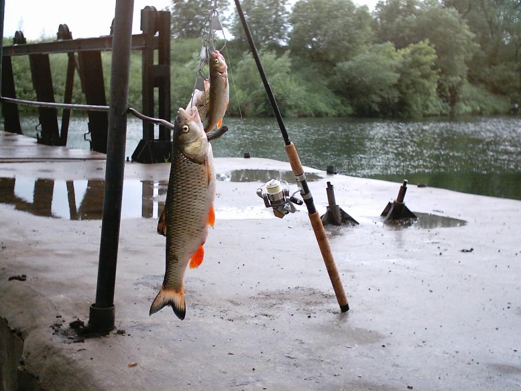 Рыбалка на селькином пруде